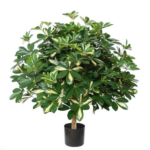 Schefflera Plant w pot 80 cm green Yellow